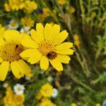 Ladybird on wild flower